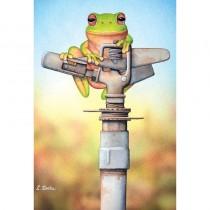 High and Dry (Australian Green Tree Frog)