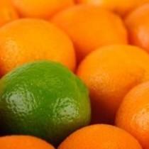 Dindi Mandarin Lime