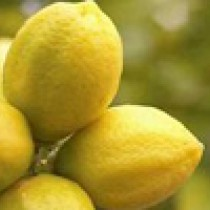 Lemon - organic