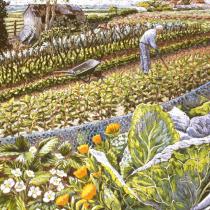 Blooming Vegetables