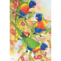 Australian Rainbow Lorikeets and Flowering Eucalyptus